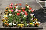職員室前の花壇