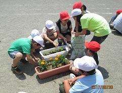 人権の花植え